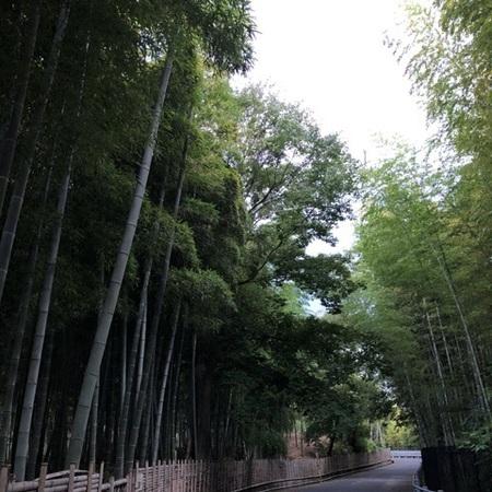 2020年9月 京都向日市 竹の道.JPG