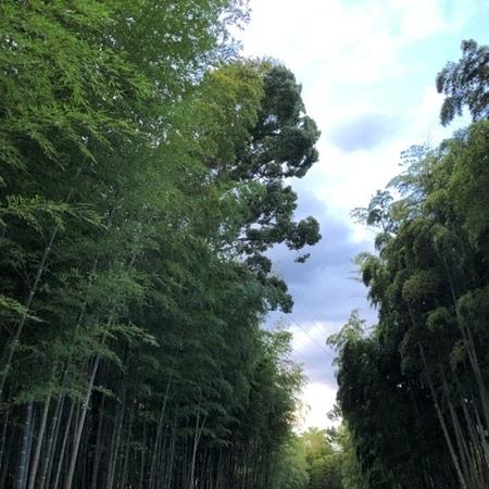 2020年9月 京都向日市 竹の道 (2).JPG
