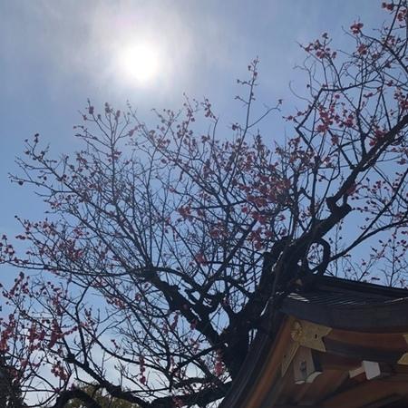 京都 北野天満宮 梅.jpg