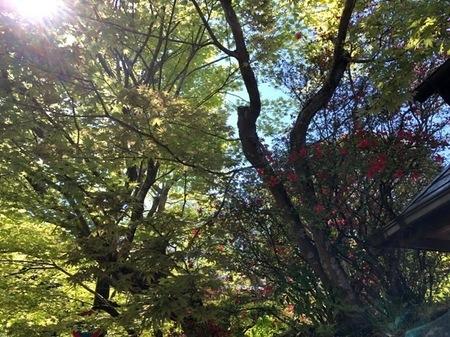 京都 大原 寂光院.JPG