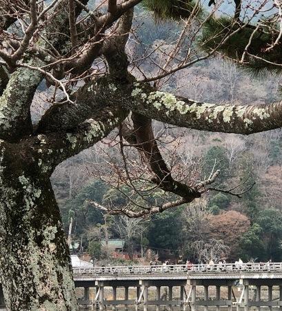 京都 嵐山 渡月橋.JPG