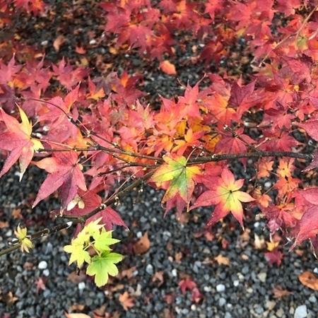 京都 紅葉 ときめきな日々.JPG