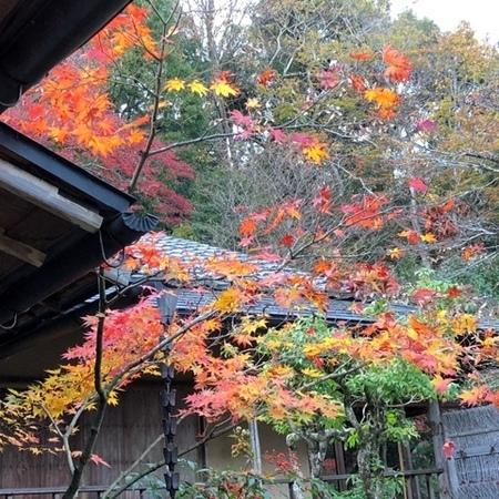 京都 紅葉 ときめきな日々 (2).JPG