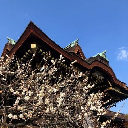 京都北野天満宮梅 (2).JPG