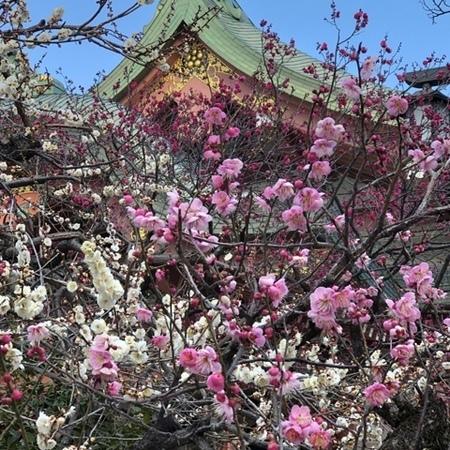 京都北野天満宮梅 (3).JPG