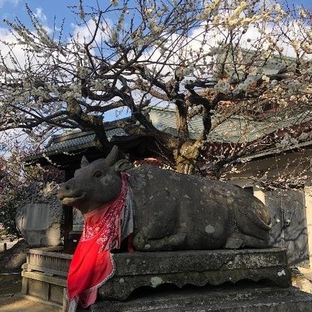 京都北野天満宮梅 (4).JPG