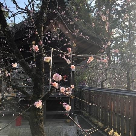 京都北野天満宮梅 (5).JPG