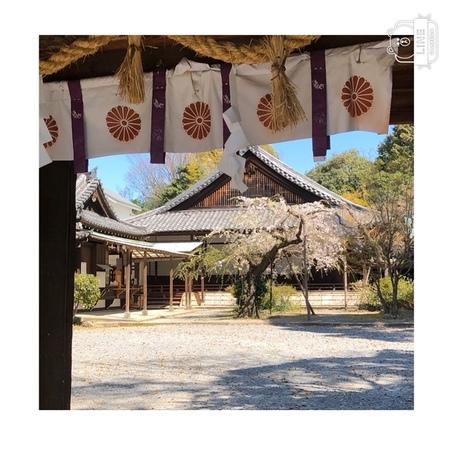 大阪 離宮の水 水無瀬神宮桜2020 (5).JPG