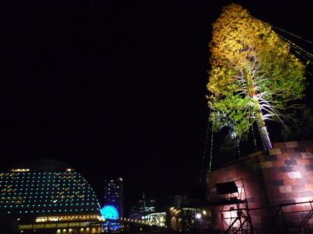 神戸 メリケンパーク クリスマスツリー (3).JPG