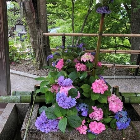 西国二十番札所 京都 西山 善峯寺 あじさい.JPG